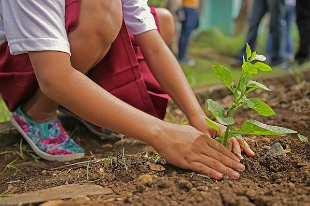 sadenie rastliny.jpg